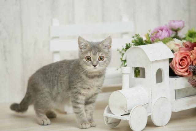 医療用カツラの試着を見るネコ